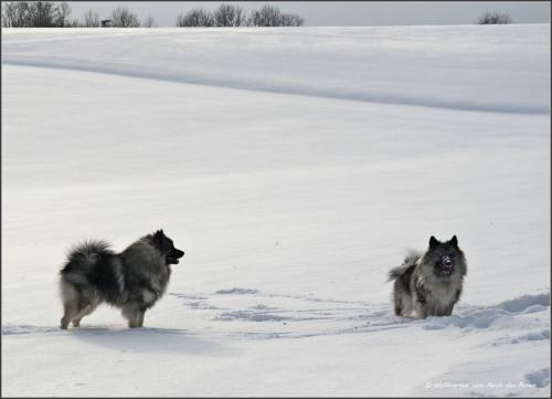 Schneeverrückt